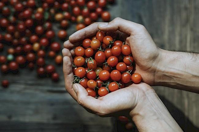 Pomidor koktajlowy - kalorie, kcal, ile waży